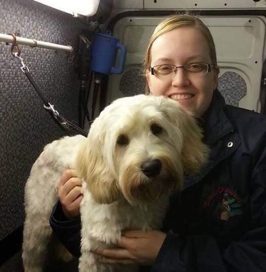 Dog Groomer Tasha Takes On Uk Dial A Dog Wash Training Role Howle